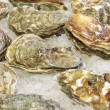 Frozen shellfish — Stock Photo