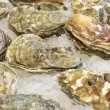 Stock Photo: Frozen shellfish