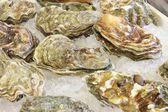 Frozen shellfish — Stock Photo