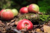 Colheita de outono — Foto Stock