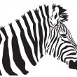 Zebra vector — Stock Vector