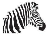 Zebra vector — Vettoriale Stock