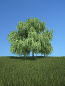 Tree with grass and blue sky — Stock Photo