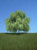 Tree with grass and blue sky — Fotografia Stock