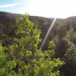 Around the treetop — Stockvideo