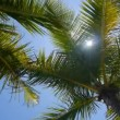 Palm trees with lens flare — Stock Video