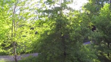 Green trees in spring — Stock Video