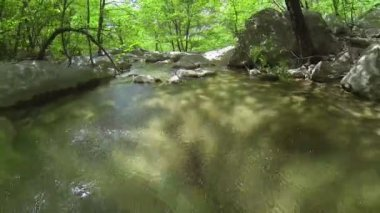 Forest creek — Stockvideo