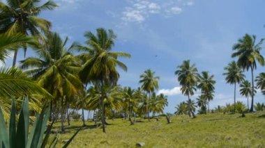 Palme su un'isola tropicale — Video Stock