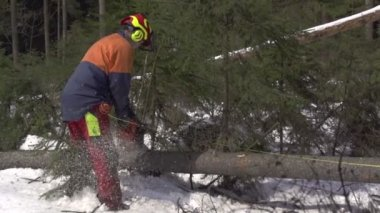 Lumberjack working in forest — Stock Video