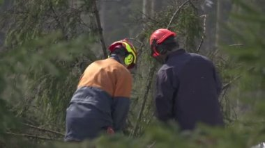 Foresters working in forest — Stock Video