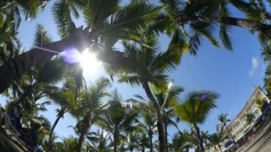 Palms at tropical resort — Stock Video