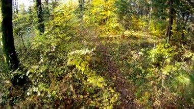 Autumn forest — Vídeo de Stock