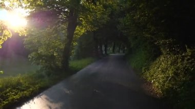 Sunlight in forest with road — Stock Video