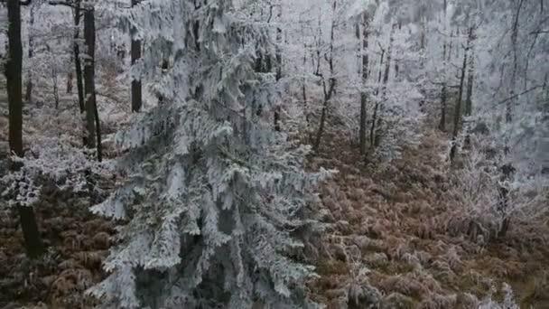 Forêt congelée — Vidéo