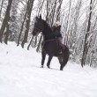Woman petting her horse while riding in winter — Stock Video