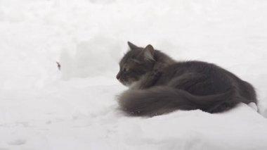 Cat on snow — Stock Video