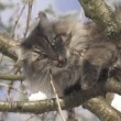 Stock Video: Cat biting twig