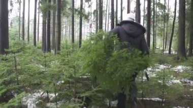 Woman carrying Christmas tree — Stock Video