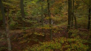 Descenso ciclista en bosque otoñal — Vídeo de Stock