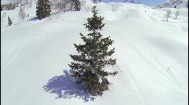 Around the tree in Alps — Stock Video