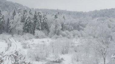 冬の森 — ストックビデオ