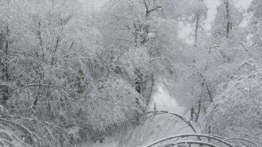 Flying over snowy treetops — ストックビデオ
