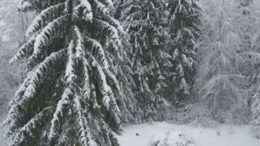 Frozen winter forest — Stock Video