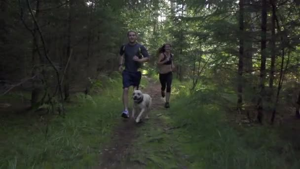 Couple jogging with a dog in the forest — Vidéo