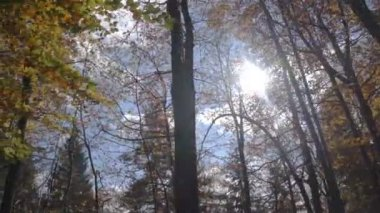 Sun in the forest — Stock Video