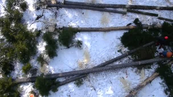 Abattre des arbres par une scie lectrique pour bois de chauffage video 57846897 - Arbre fruitier comme bois de chauffage ...