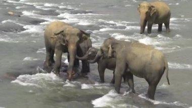 Elephant family — Vidéo