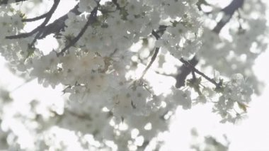 Flores brancas — Vídeo Stock