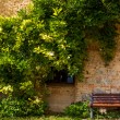 Climbing plant and a bench — Stock Photo