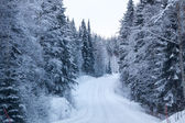 Winter forest and a snow road — Foto Stock