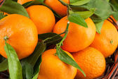 Ripe mandarins with leaves — Stock Photo