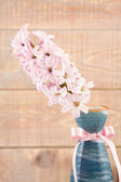 Pink hyacinth in vase with ribbon — Stock Photo