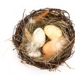 Bird's nest with easter eggs — Stockfoto