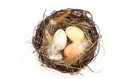 Bird's nest with easter eggs — Stock Photo