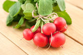 Bunch of fresh organic radish — Stock Photo