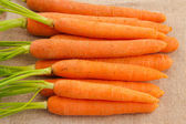 Fresh organic carrots with their tops — Stock Photo