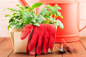 Garden tools with plants on wood background — Stock Photo