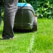 Green grass is mowed lawn mower — Stock Photo #49733725