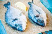 Zwei rohe Dorada Fische mit Zitrone — Stockfoto