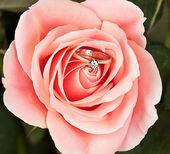 Anel de casamento em rosa elegante — Fotografia Stock