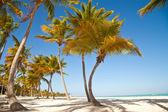 Caribbean sea and palms — Stock Photo