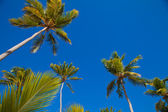Coconuts palm trees perspective view from floor high up — Stockfoto