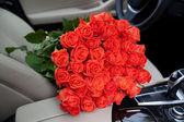 Freshly red roses — Stock Photo
