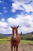 Cheval dans la campagne toscane — Photo