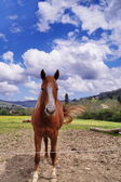 Horse in the Tuscan country — Stock Photo